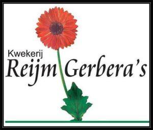 Reijm Gerbera's