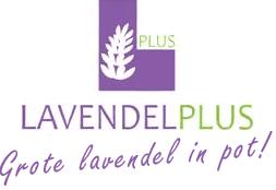 Lavendel plus